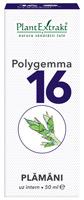 Polygemma nr16